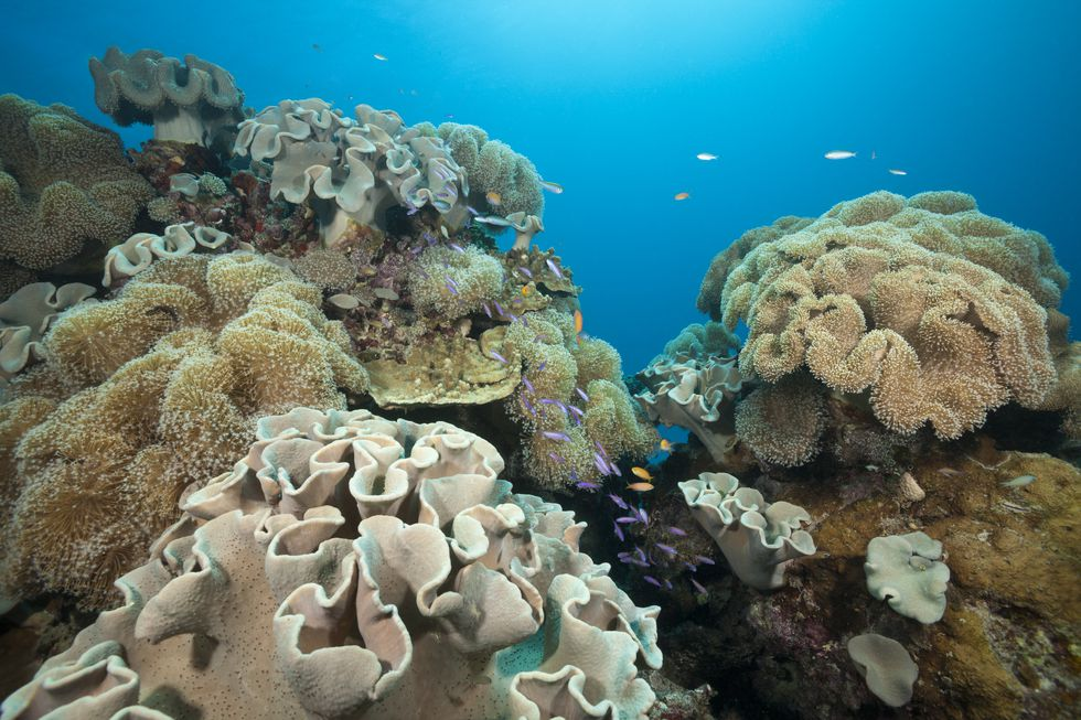 Scientists are trying for new Gene editing to save world's coral reef