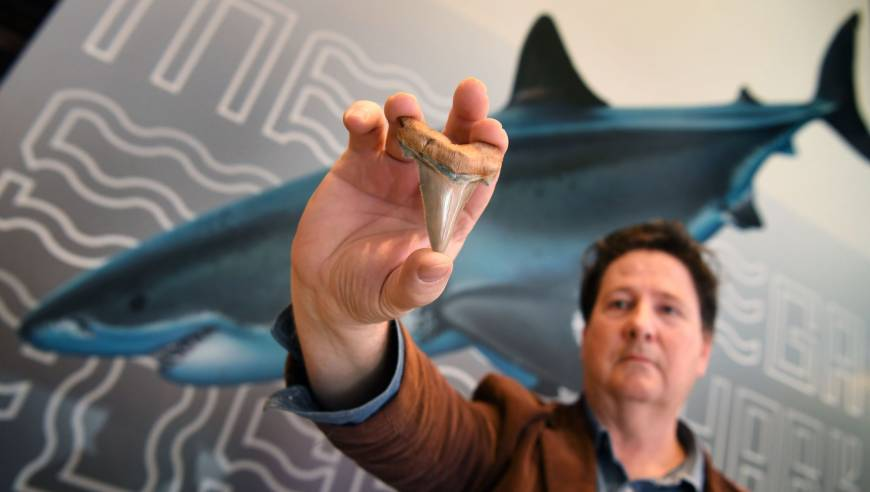 Amateur fossil hunter stumbles upon rare teeth from ancient mega-shark
